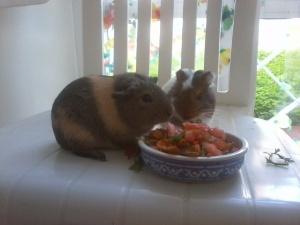 Chopi disfrutando el desayuno con su novia